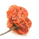Scotch bonnet 15gr
